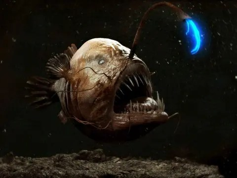 Remarkably Bizarre Deep Sea Creatures Spooky And Magnificent Not A Freak Show