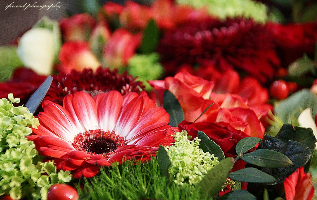Gerbera Flower Bengali Meaning Gerberas | The Meanings Of Gerbera Flowers Stem From Those