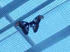 Atlas Moth at Butterfly Wonderland