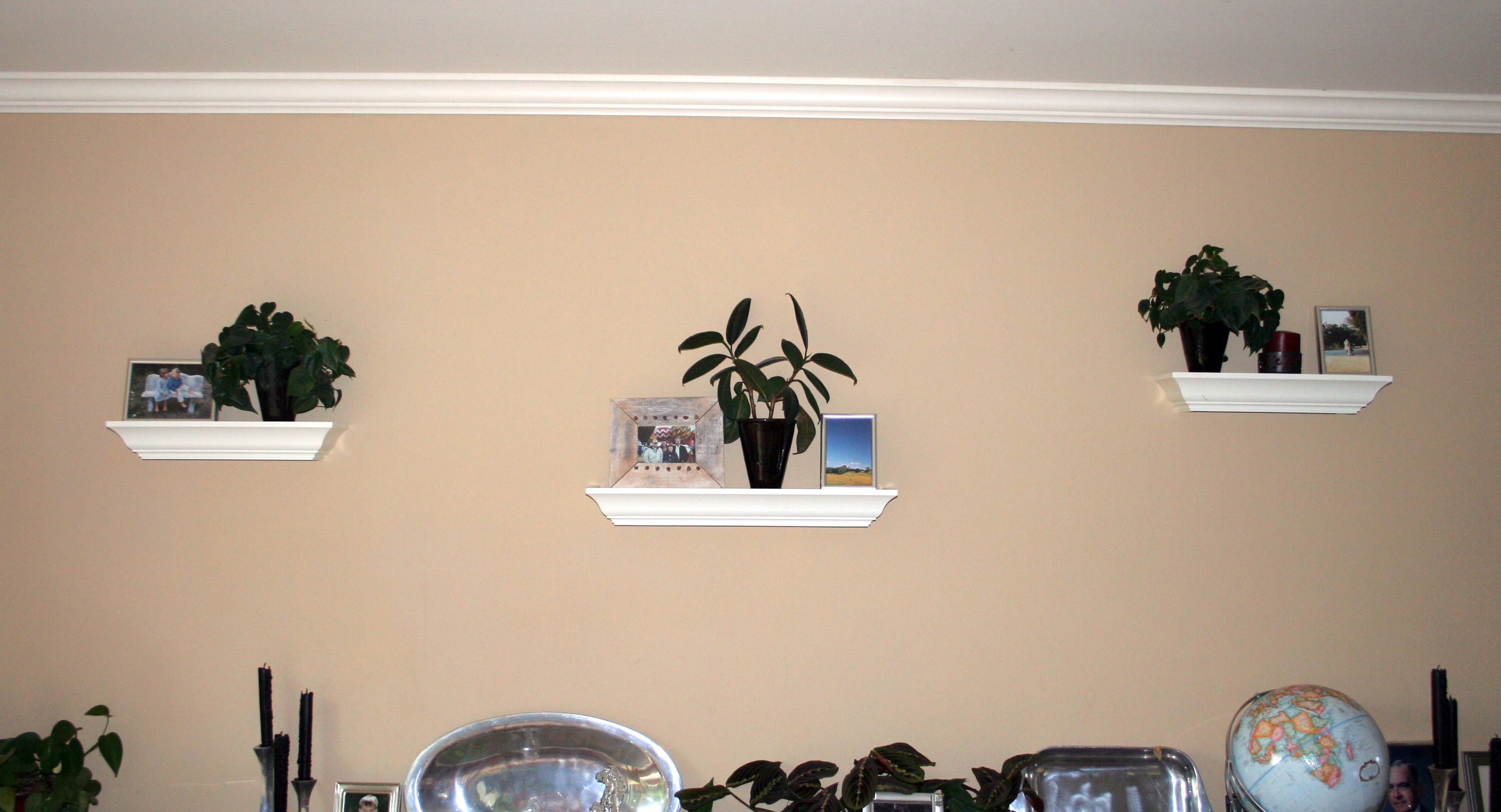 Plant Shelves For Walls Decorating With House Plants Livebinders Blog