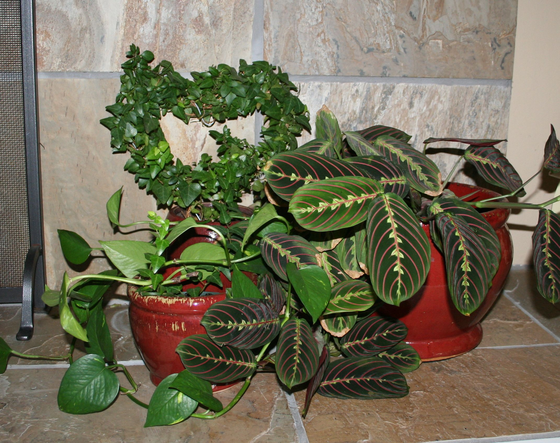 Plant In House Decorating With House Plants Livebinders Blog