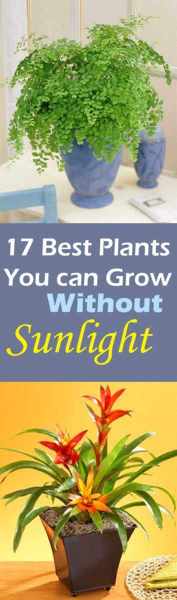17 Beautiful Plants You Can Grow Without Sun