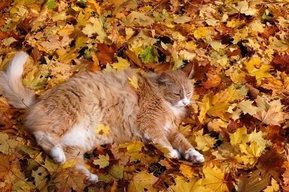 Fall Kitten Wallpaper 紅葉と美しく混ざり合う秋の猫の画像15枚! ねこトピ