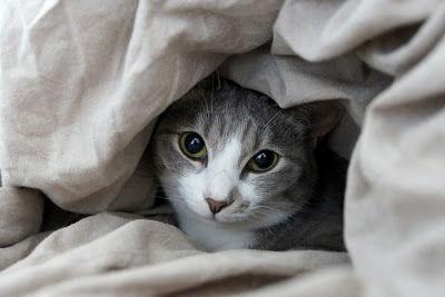 きゃわわな猫画像下さい