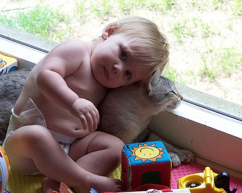 猫と赤ちゃん12