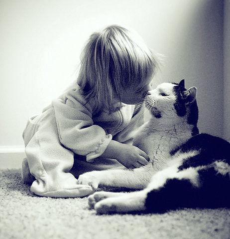 猫と赤ちゃん14