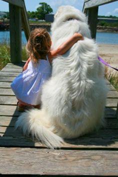 犬と赤ちゃん36