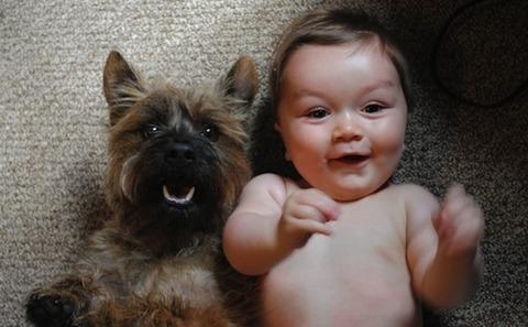 犬と赤ちゃん16