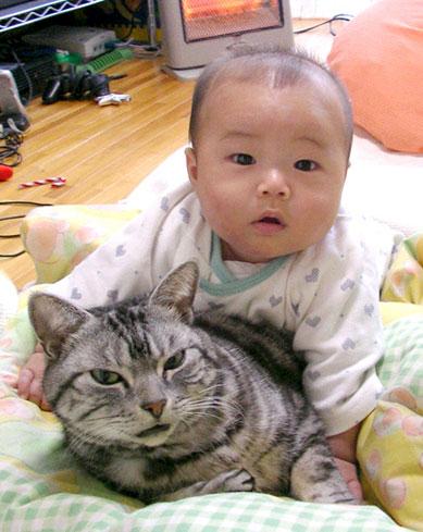 猫と赤ちゃん39