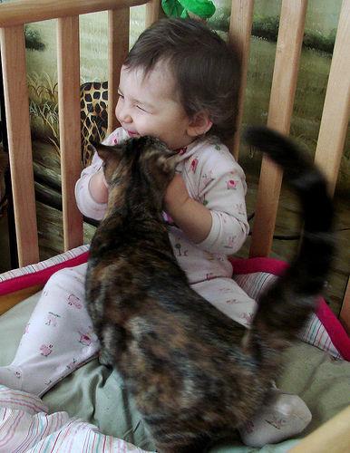 猫と赤ちゃん8