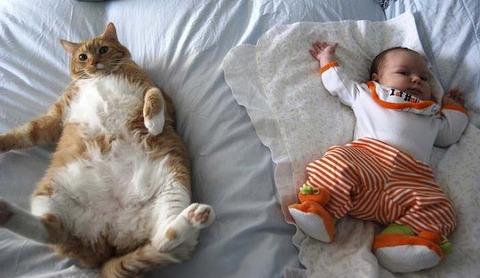 猫と赤ちゃん3