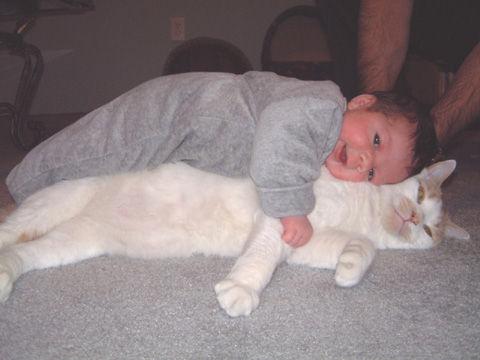 猫と赤ちゃん32