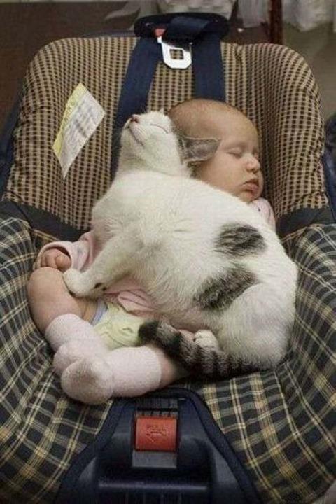 猫と赤ちゃん26