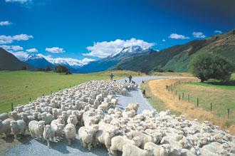 株式にかかる税金が0円のニュージーランド