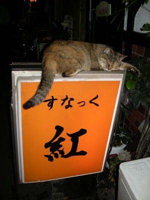 吹くほど可愛い画像『紅の猫』