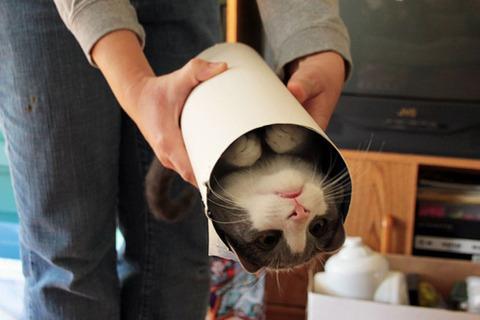 吹くほど可愛い画像『海苔巻き、具は猫』