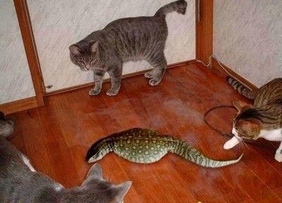 吹くほど可愛い画像『猫 VS つちのこ?』