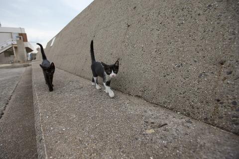 吹くほど可愛い画像『銀座の猫』