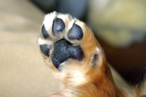 愛犬(5)が余命宣告されたったwwwwwwwwwwww