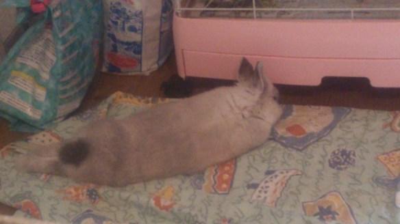 うちのウサギがくつろいでてワロタ
