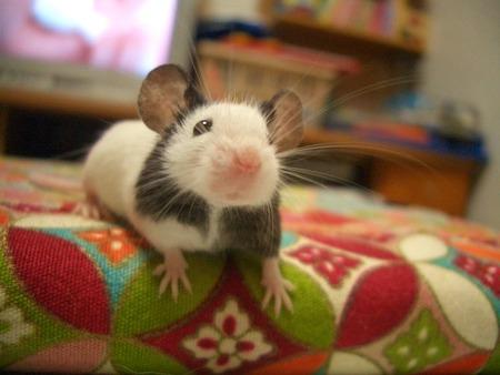 マウス実験でダウン症からの回復に成功…将来的に画期的な治療をもたらす可能性