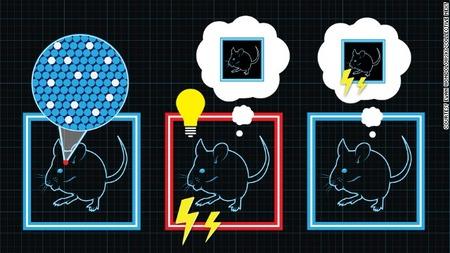 マウスの脳で実体験と異なる「偽の記憶」を作り出すことに成功 ノーベル賞の利根川進教授