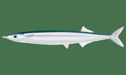 さんま 食べもの 秋刀魚に関連した画像-01