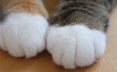 クソワロタwwwGoogleストリートビューに「2本足の猫」が写っていて話題にwwwwwwwww