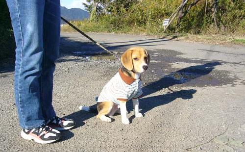 飼い犬にリード無しでドヤ顔で散歩する飼主なんなの?