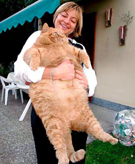 【画像あり】 巨大なネコがかわゆすぎるwwwwwwwwwwwwwwwwwwwwwwww