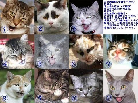 【画像】 「日本の猫は極悪すぎないか!?」 と海外で話題に (´・ω・`)