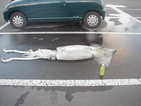 【衝撃】 駐車場でとんでもないものが激写される えええええええええええええ??wwwwwwwww