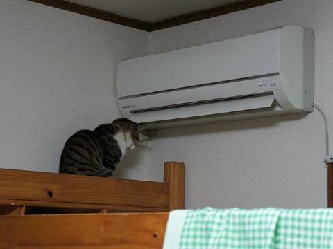 【悲報】 飼い猫が 「外に出せ」 って言うから出したらwwwww (画像あり)
