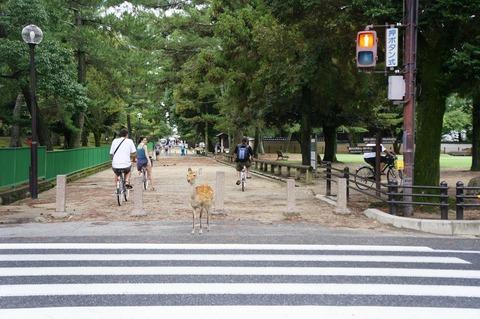 【画像あり】 奈良公園の鹿が信号をきちんと守ってる件 wwwwwwwwwwwwwwwwwwwww
