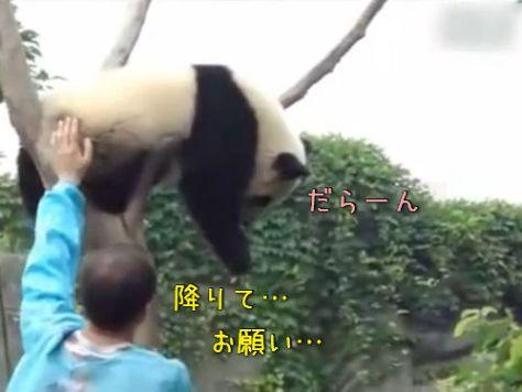木登りパンダ00