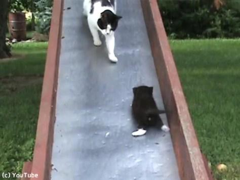 滑り台を落ちる子猫を助ける親猫…まさかのオチ00