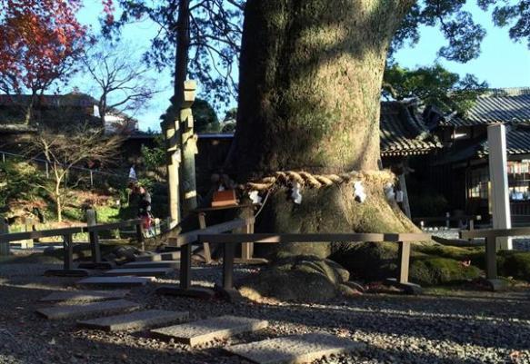 わがまま勝手な参拝で神社悲鳴…ご神木に抱きつき、川に投銭 マナー守って初詣を