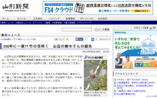 100年に一度、竹の花が咲く 不吉なことが起こるという言い伝えも