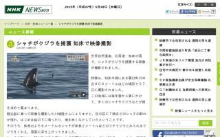 シャチがクジラを捕獲 知床で映像撮影