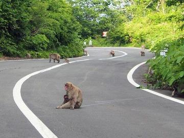 沖縄に集まったサヨク活動家が猿そっくりだと話題に