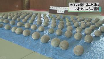 「自分たちで食べるために盗んだ」 畑からメロン112個を盗んだベトナム人逮捕