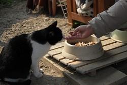 """【和歌山】野良ネコへの""""餌やり規制条例""""に住民から賛否両論、2月議会に改正案提案へ"""
