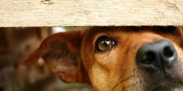 """【スペイン】犬や猫に""""人権""""を与える条例が可決、殺処分も禁止へ"""