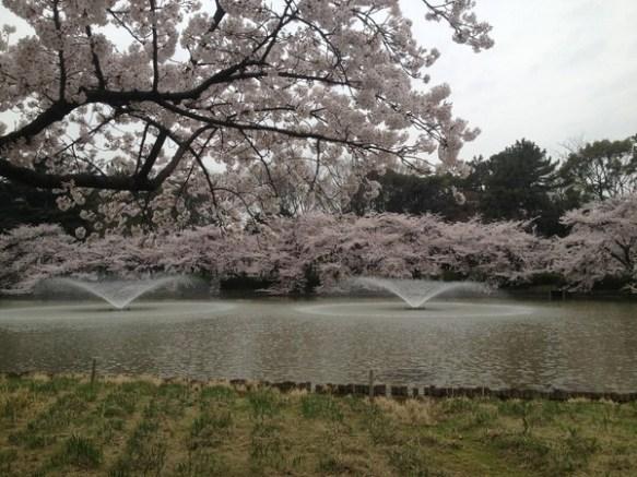 【画像】桜綺麗すぎワロタwwwww