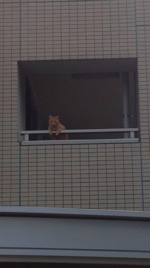 昼からずっと猫がこっち見てる