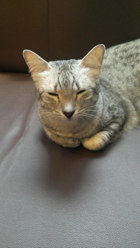 【画像】今猫カフェにいる