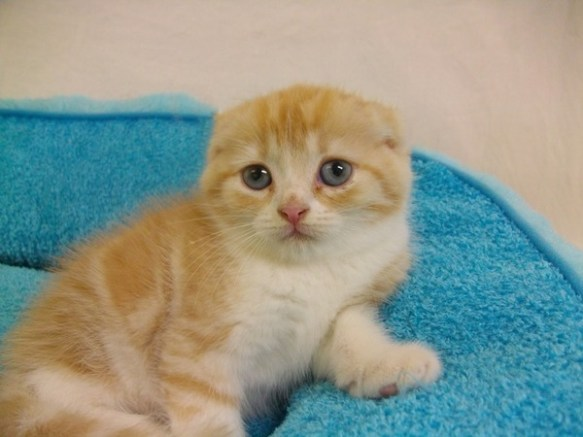 【画像】色んな動物の耳消したら可愛くなりすぎワロタwwwww