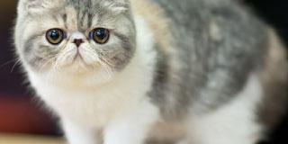 癒される動物画像貼ってこうw