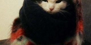 家のクソ猫が俺様の2万のマフラーを被りやがったwwwwwwww