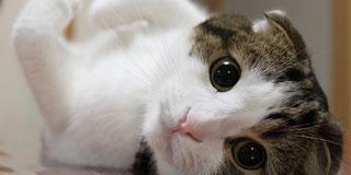 「猫」を「妹」に変えたら可愛すぎワロタwwwww